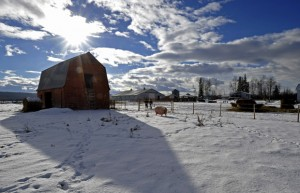 The old barn at the Crichton Farm. (Photo by Ed Kaiser/ Edmonton Journal)