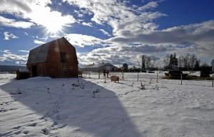 The old barn at the Crichton Farm. (Photo by Ed Kaiser/ Edmonton Journal)